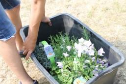 Blumens fürs INISEK 1-Hochbeet in Strausberg