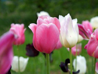 Berufsbereich - Garten- und Landschaftsbau und Floristik